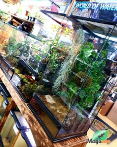 🦎🐸 Looking for accessories to keep your pet healthy and happy? 😁😁 We've got you covered! Visit our store or site to see our great collection. See you soon! #MagazooReptiles Amphibians, Reptiles, Reptile Accessories, Vivarium, Pets, Store, Healthy, Happy, Collection