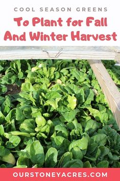 Year Round Gardening Series - Cold Frame Crops is part 3 of our winter gardening series. Lean what greens you can grow in winter in a cold frame! Fall Vegetables, Planting Vegetables, Organic Vegetables, Growing Vegetables, Veggies, Gardening For Beginners, Gardening Tips, Vegetable Garden Tips, Meteor Garden 2018