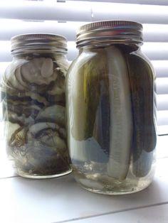 Little Gene Green Bean: Homemade Dill Pickels