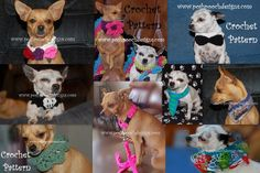 Posh Pooch Designs Dog Clothes: Crochet Dog collars - CUTE!!!