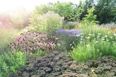 Piet Oudolf's garden  from  Claus  Dalby's camera  2015