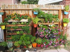 Another simple and creative use of wooden pallets: easy vertical garden for small spaces