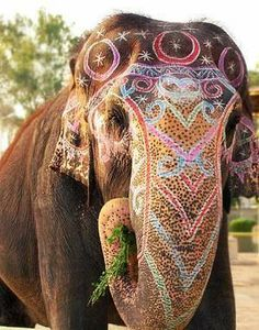 Elephants in Color | Elephant Ear Inspiration @Samantha Greene this has you written all over it!