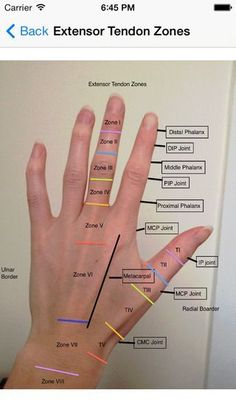 TherapyWhiz by Lesley Addison Human Body Anatomy, Human Anatomy And Physiology, Ot Therapy, Massage Therapy, Occupational Therapy Schools, Physical Therapy Student, Medical Anatomy, Nbcot Exam, Nursing
