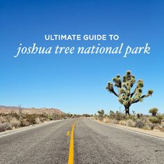 Here are 11 things to do in Joshua Tree National Park! For those who like hiking, rock climbing, camping, or stargazing, you'll never tire of this place.