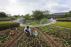 VTN   Vo Trong Nghia Architects - Farming Kindergarten
