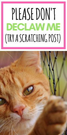 23 For The Love Of Cats Ideas Cats Pet Training Blogger Support
