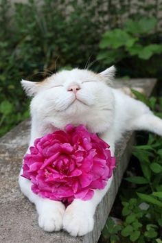 25 улыбающихся котов, глядя на которых на душе становится веселее