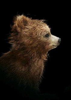I am the making of the great bear warrior Oso Paddington, Teddy Hermann, Baby Animals, Cute Animals, Teddy Bear Pictures, Brother Bear, Bear Face, Love Bear, Cute Little Things