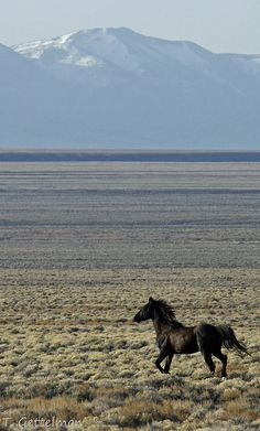 Feral Horse in Northeastern Nevada 4 | Flickr - Photo Sharing!