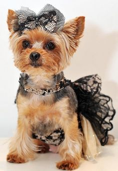 Lovely puppy with nice dress ❤Dog images, dog animations, dog quotes, dog training tips, funny dogs, dog and cat, dog and pet, cute dog and baby ♥