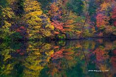 Fish Pond Color