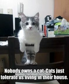NoBoDy oWNS a CaT.