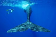 Graph world population sperm whale