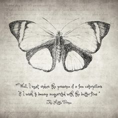 butterfly-quote-the-little-prince-taylan-soyturk.jpg (900×900)