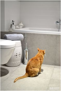 My Cats & Interior Ideas: Bathroom