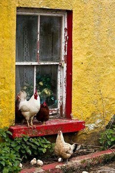 Having chickens here at the chateau, I adore this picture!