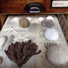 Seaside collection The Naturalist