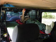 Removable sleeping platform, lifted partition barrier, Mercedes Benz, 300GD, Gelandewagen, G wagon, G klasse, G Class, W460, Diesel, OM617A, turbo, OM617.952, LWB, 4x4, Long Wheel Base, 5 Doors, Overland, Custom, Modif