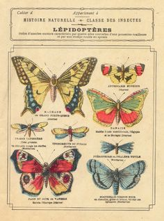 cahier lépidoptères by pilllpat Vintage Butterfly, Butterfly Art, Butterfly Images, Butterfly Design, Vintage Labels, Vintage Ephemera, Vintage Prints, Vintage Art, Antique Prints