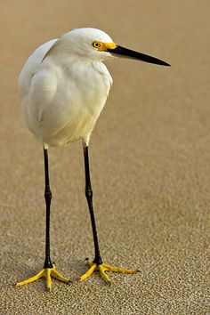 loong legs  Sand and sun kissed white with pops of black and yellow!! :-)
