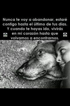 No al maltrato animal.😘😘😘