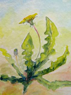 Spring Yellow Dandelion Flower painting original watercolor painting 7.5 x 11