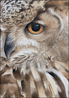watercolor owl images | Watercolour painting of an owl.