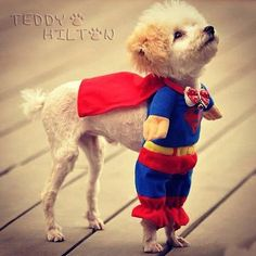 too too cute or super puppy.