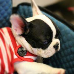 I'm sleepy ^^ by yinglaphatrada http://instagr.am/p/RSPa2GkiB4/