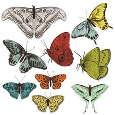Gran conjunto de mariposas de vector dibujado a mano — Ilustración de stock Butterfly Illustration, Hand Illustration, Vector Hand, Fauna, Photoshop Actions, Rooster, How To Draw Hands, Printables, Portrait