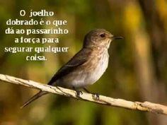 A Lição do Pássaro - Mensagens Bíblicas (mensagem de Deus pra você)