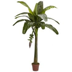 Nearly Natural 6' Banana Silk Tree (Real Touch) -- Click image to review more details.
