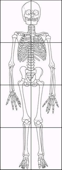 make a paper skeleton to label bones | school | pinterest, Skeleton