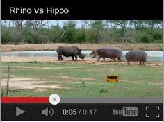 Rhino vs Hippo! Watch here:  http://gdurl.tk/GP