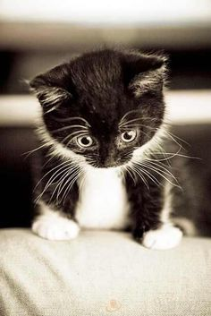 """""""The problem with cats is that they get the same exact look on their face if they see a moth or an axe murderer."""" --Paula Poundstone"""
