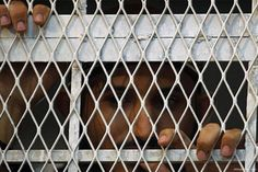Report: Dozens of detainees moved from secret UAE prisons in Yemen https://betiforexcom.livejournal.com/28169753.html  Dozens of detainees were transferred from a secret prison run by the United Arab Emirates in Yemen to another government-run facility in the coastal city of Mukalla, a senior Yemeni official said. The Associated Press reported the Yemeni official as saying that 133 detainees were transferred from the Riyan Airport to the newly-renovated Central Prison in Mukalla. The airport…