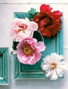 teal and pink-- color inspiration + combination --