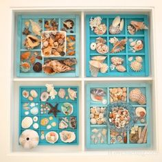how to add seashells to a display table