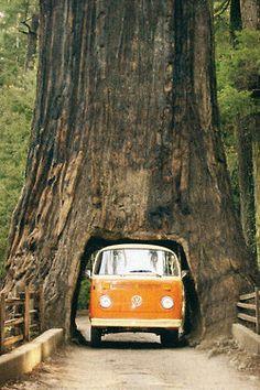 tree hippie hipster vintage boho indie Grunge nature travel forest van road adventure hippy Explore gypsy wanderlust