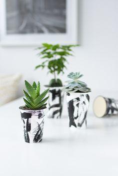 Recyklace kávových džbánků: Rostliny jít