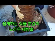 6분이면 쉽게 배우는 식물분갈이 방법, 노하우 대방출 - YouTube Handmade Crafts, Diy And Crafts, Garden Landscaping, Plants, Food, Wisdom, Gardening, Front Yard Landscaping, Lawn And Garden