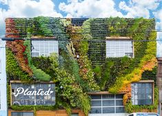 planted design Be Safe House Spring has definitely arrived, radiating vibrant flowers all over our SqFt Living Wall in SF's Mission District! Moss Wall Art, Entrance Sign, Garden Nursery, Article Design, Plant Wall, Plant Design, Flowers Nature, Land Scape, Natural