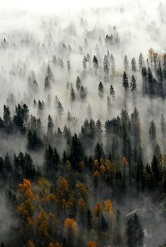 Fall, forest, fog