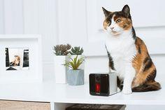 Petcube Play: juega y habla con tus mascotas a distancia - FRACTAL estudio + arquitectura