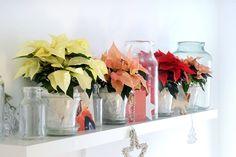 Haal de Kerstsfeer in huis met Kerststerren