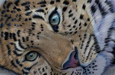 Leopard pastels by Sarahharas07.deviantart.com on @deviantART      Leopard pastelsby *Sarahharas07  Traditional Art / Drawings / Animals	©2013 *Sarahharas07  Soft pastels on velourspaper  Size A4    Panthera pardus orientalis, Amur leopard.  Thera are nine subspecies of the Panthera pardus.  The leopard is the smallest of the four 'big cats'.  The Amur leopard inhabits the Russian Far East, Korean Peninsula and Northeast China.    The leopard is near threatened.