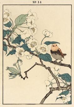 IMAO Keinen(今尾 景年 Japanese, 1845-1924)Pear, Swinhoe's Red-tailed Robin   1891  Color woodblock   via