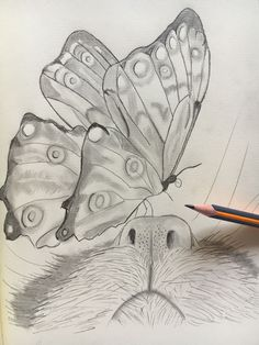 # Bleistiftzeichnung butterfly - Heather Part 5 - Katze Easy Pencil Drawings, Sketchbook Drawings, Drawing Sketches, Cool Drawings, Animal Sketches, Animal Drawings, Crayon Crafts, Butterfly Drawing, Chalk Art