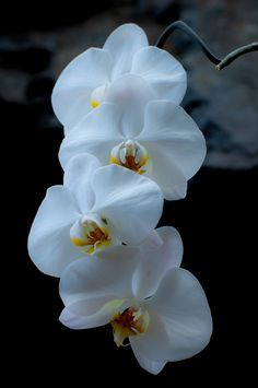Orchids...also one of the top 5 favorite/most elegant flowers
